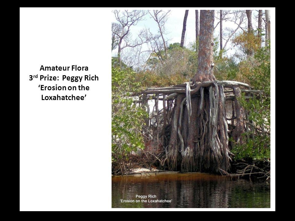 Amateur Flora 3 rd Prize: Peggy Rich 'Erosion on the Loxahatchee'