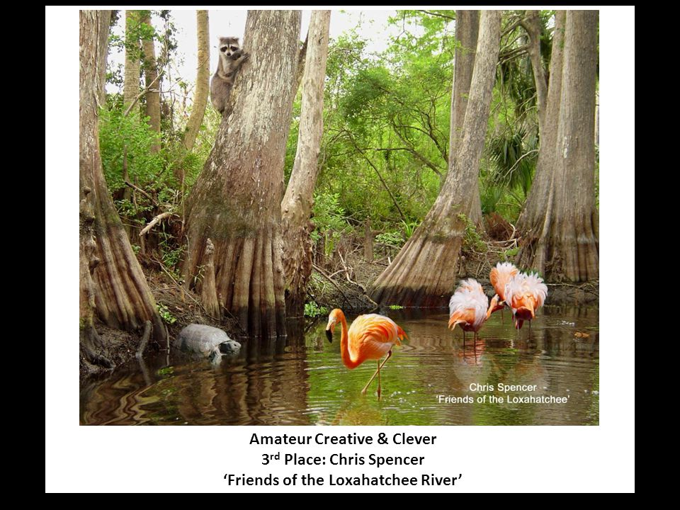 Amateur Creative & Clever 3 rd Place: Chris Spencer 'Friends of the Loxahatchee River'