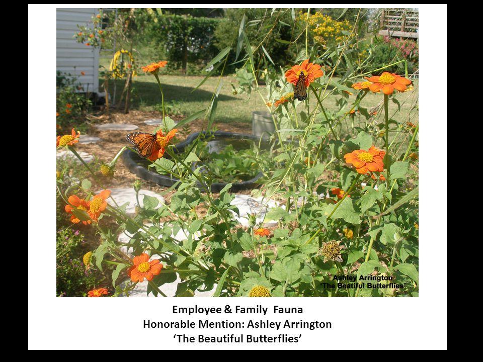 Employee & Family Fauna Honorable Mention: Ashley Arrington 'The Beautiful Butterflies'