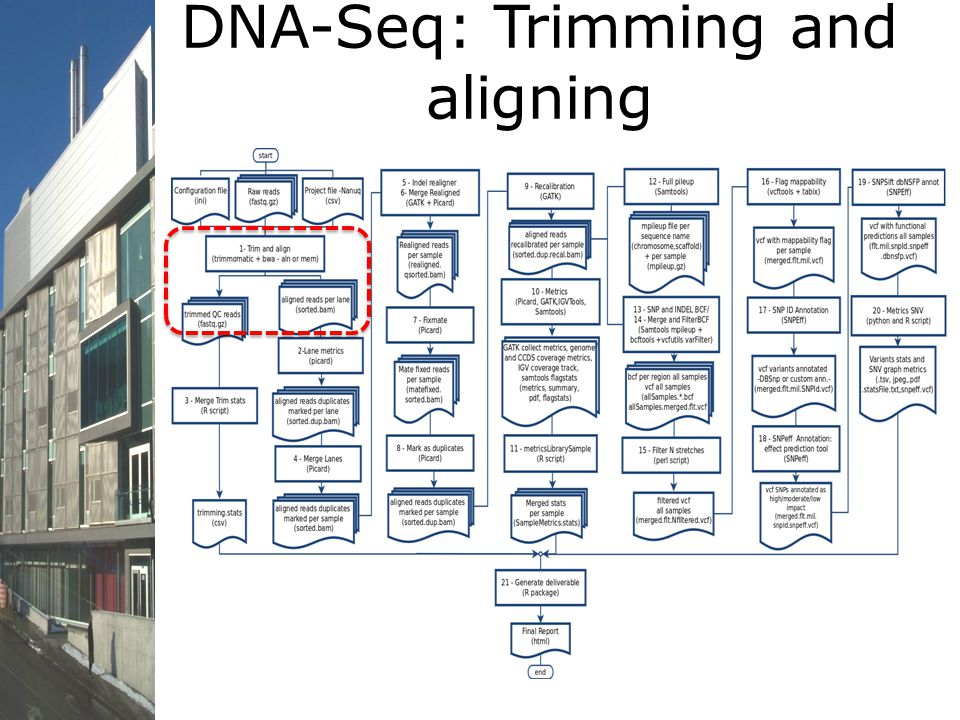 DNA-Seq: Trimming and aligning