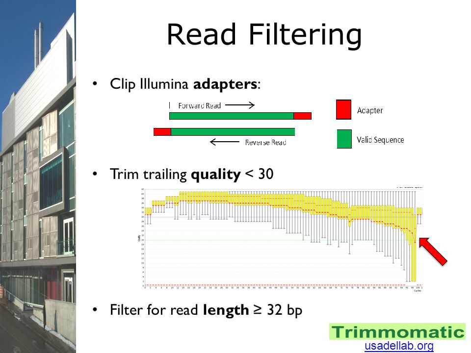 Read Filtering Clip Illumina adapters: Trim trailing quality < 30 Filter for read length ≥ 32 bp usadellab.org