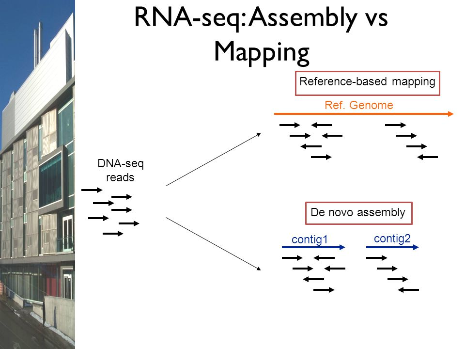 DNA-seq reads contig1 contig2 De novo assembly Ref. Genome Reference-based mapping RNA-seq: Assembly vs Mapping