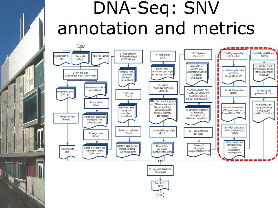 DNA-Seq: SNV annotation and metrics