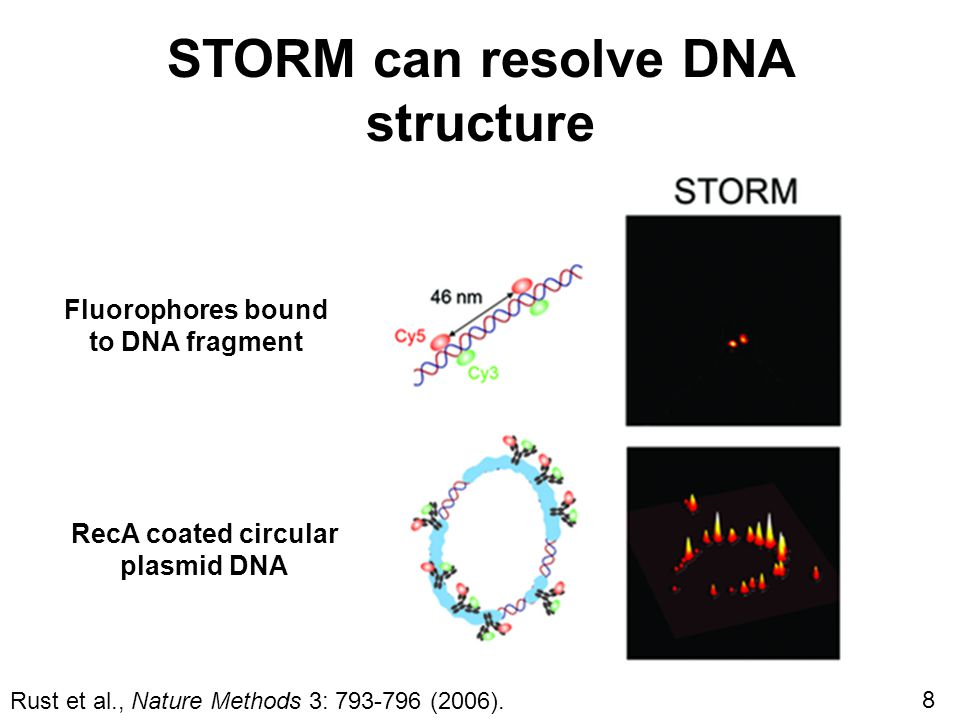 STORM can resolve DNA structure Fluorophores bound to DNA fragment RecA coated circular plasmid DNA Rust et al., Nature Methods 3: 793-796 (2006).