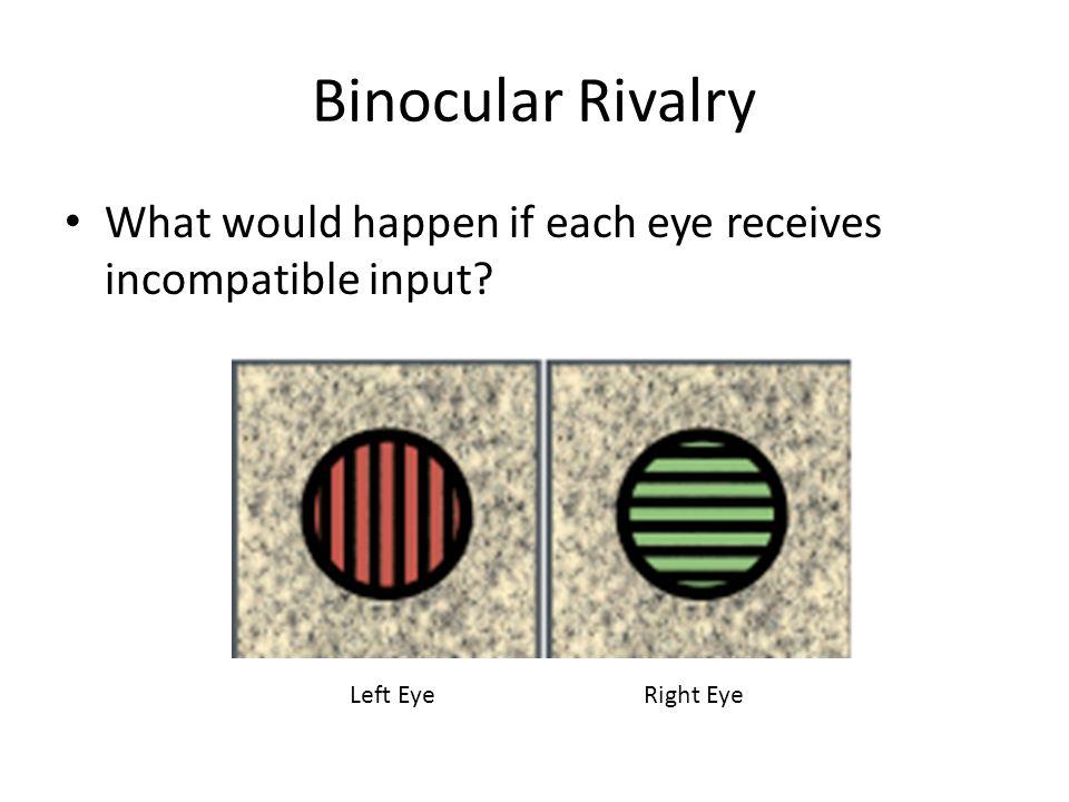 Binocular Rivalry What would happen if each eye receives incompatible input? Left EyeRight Eye