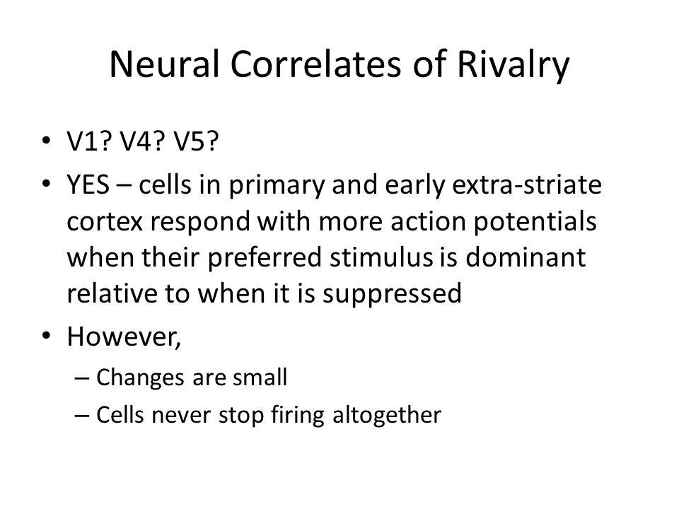Neural Correlates of Rivalry Inferior Temporal Cortex (Ventral Pathway).