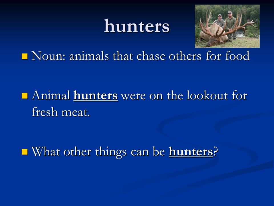 hunters Noun: animals that chase others for food Noun: animals that chase others for food Animal hunters were on the lookout for fresh meat. Animal hu