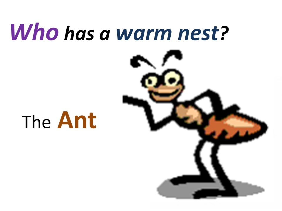Who has a warm nest ?