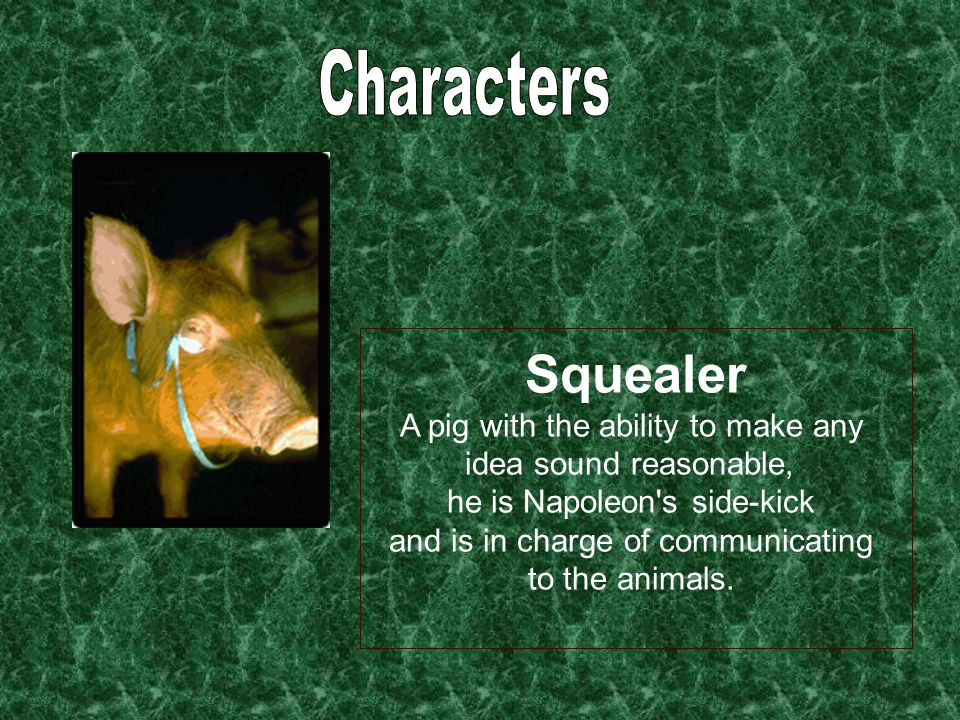 Squealer A pig with the ability to make any idea sound reasonable, he is Napoleon s side-kick and is in charge of communicating to the animals.
