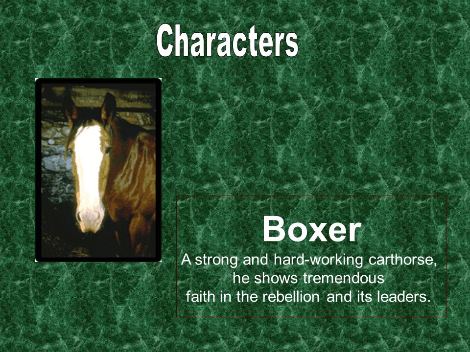 Boxer A strong and hard-working carthorse, he shows tremendous faith in the rebellion and its leaders.