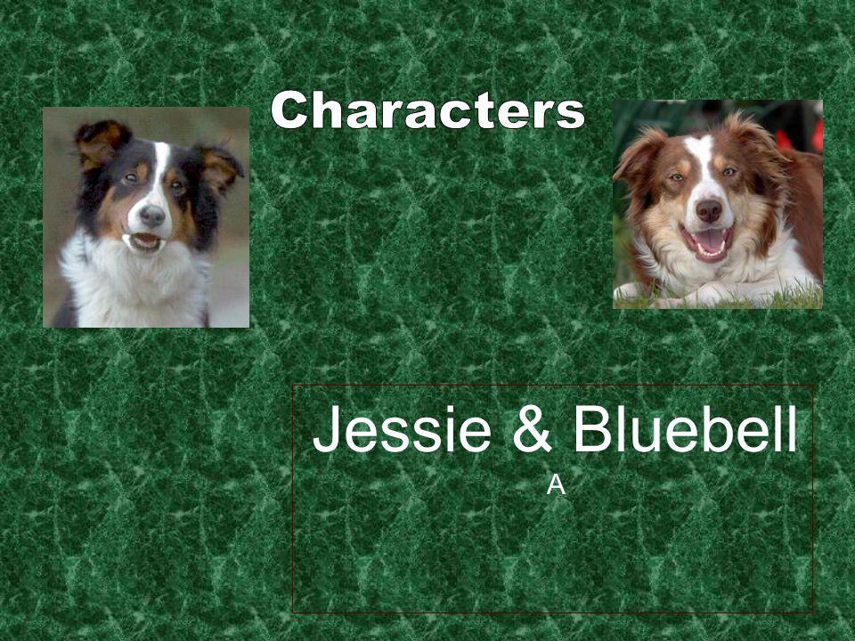 Jessie & Bluebell A