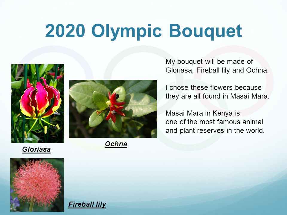 2020 Olympic Bouquet Gloriasa Fireball lily Ochna My bouquet will be made of Gloriasa, Fireball lily and Ochna. I chose these flowers because they are