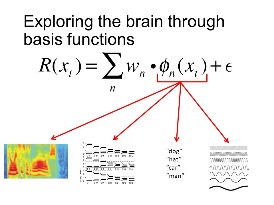 "Exploring the brain through basis functions ""dog"" ""hat"" ""car"" ""man"""