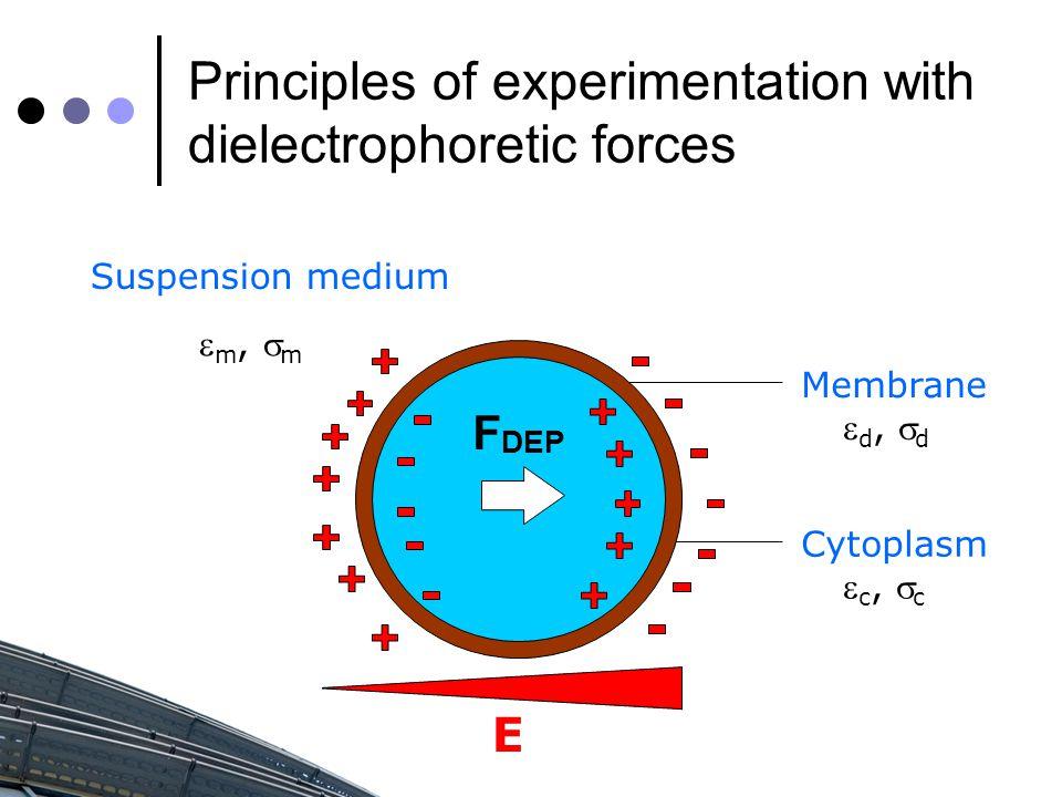 Principles of experimentation with dielectrophoretic forces Suspension medium Membrane Cytoplasm  c,  c  d,  d  m,  m E F DEP