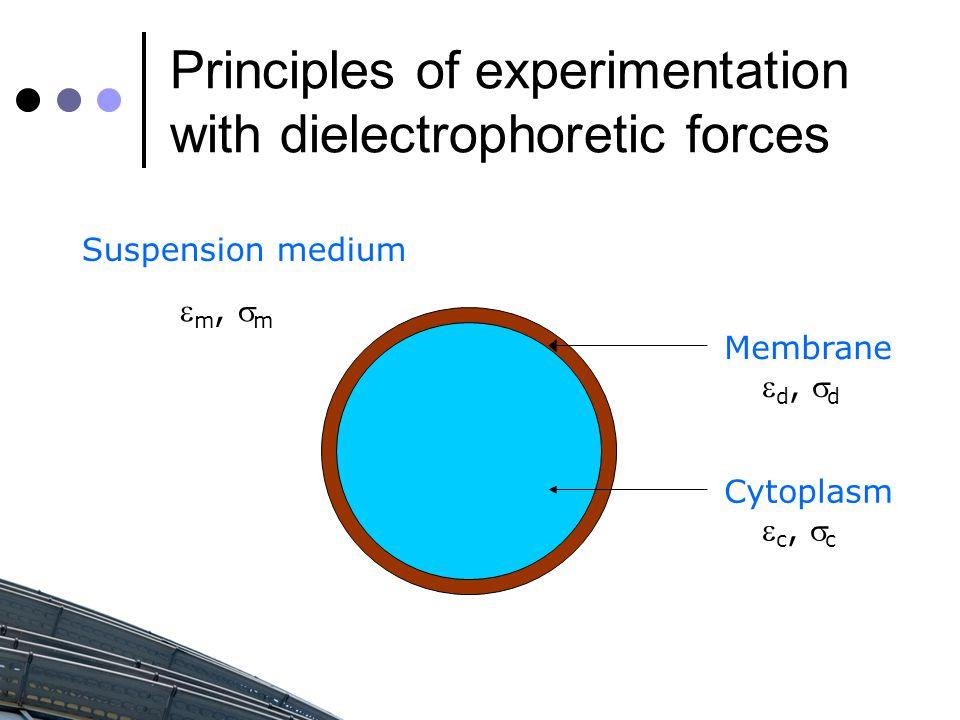 Suspension medium Membrane Cytoplasm  c,  c  d,  d  m,  m