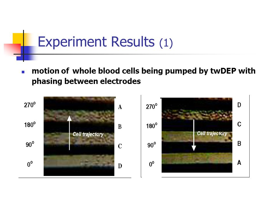 Experiment Results (1) motion of whole blood cells being pumped by twDEP with phasing between electrodes