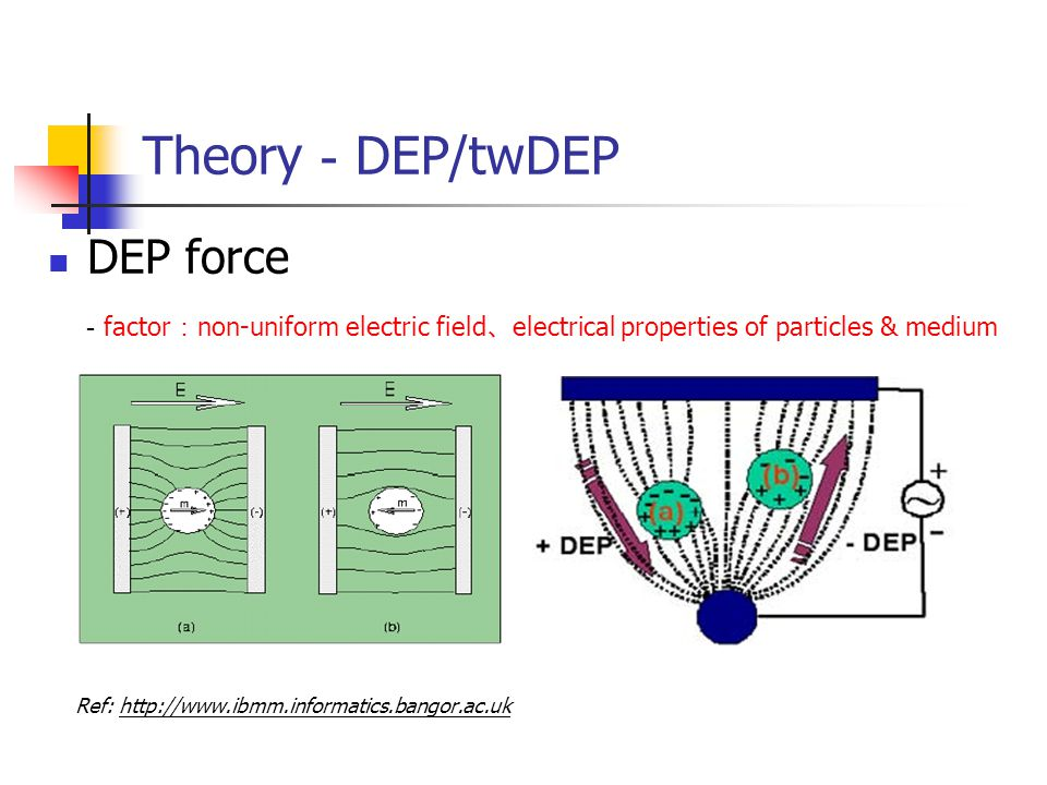 Theory - DEP/twDEP DEP force - factor : non-uniform electric field 、 electrical properties of particles & medium Ref: http://www.ibmm.informatics.bangor.ac.uk