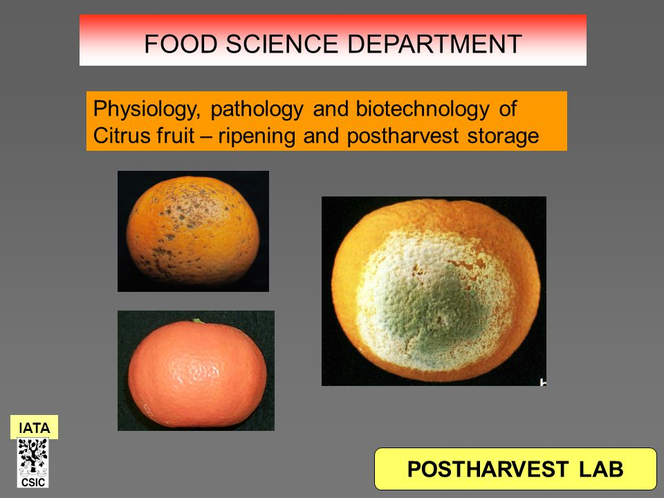 POSTHARVEST LAB Physiology, pathology and biotechnology of Citrus fruit – ripening and postharvest storage IATA FOOD SCIENCE DEPARTMENT