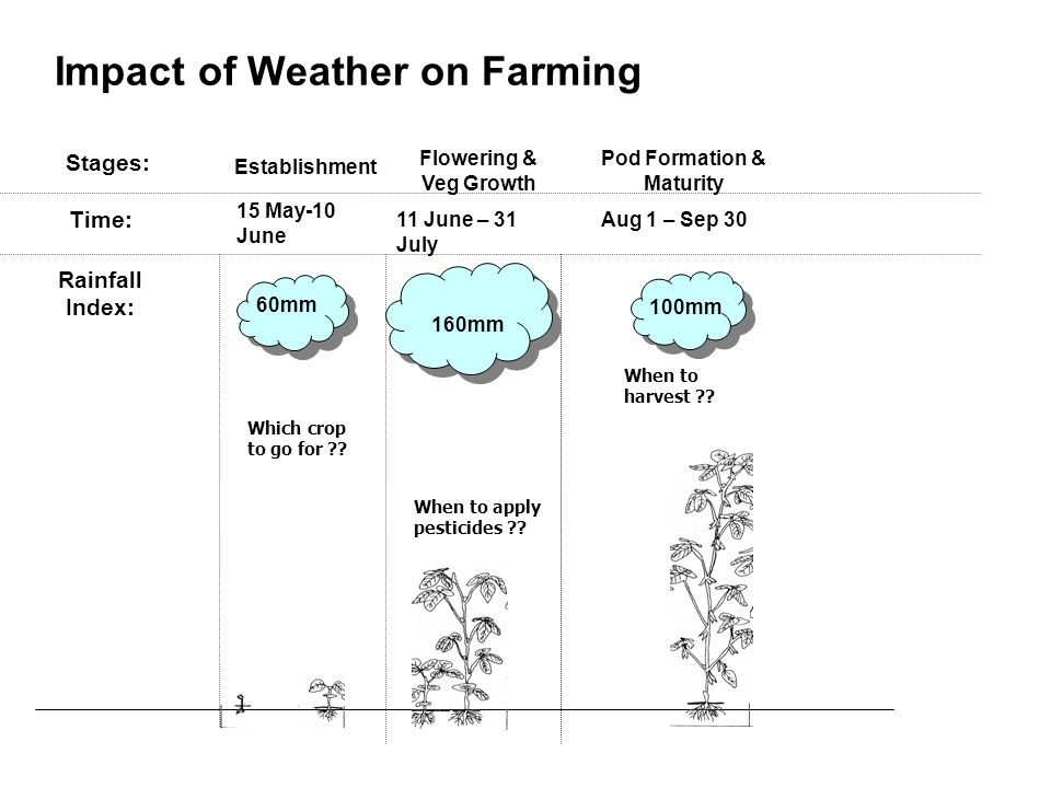 Impact of Weather on Farming 15 May-10 June 11 June – 31 July Aug 1 – Sep 30 Establishment Flowering & Veg Growth Pod Formation & Maturity 60mm 160mm 100mm Rainfall Index: Stages: Time: Which crop to go for .