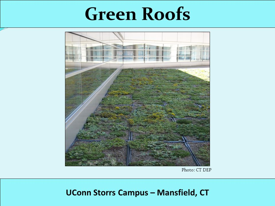 Green Roofs UConn Storrs Campus – Mansfield, CT Photo: UConn