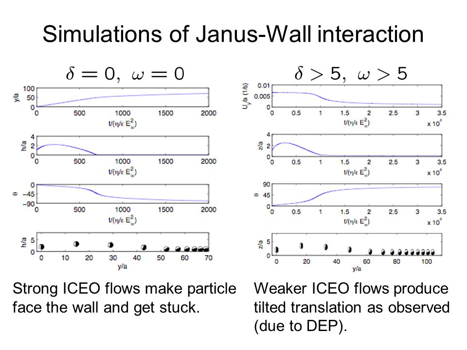 Simulations of Janus-Wall interaction Strong ICEO flows make particle face the wall and get stuck.