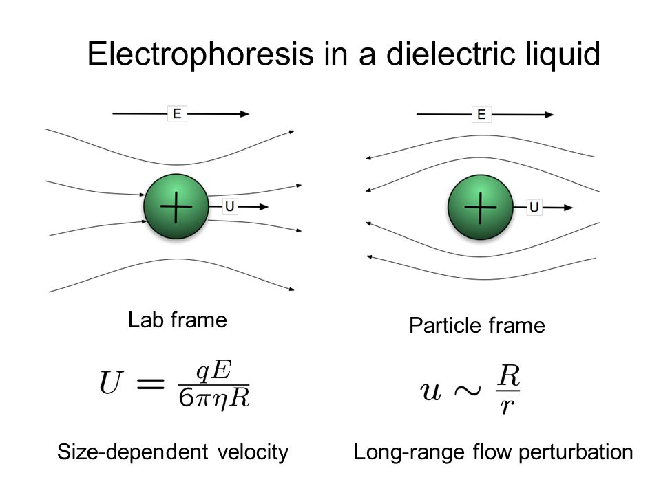 Electrophoresis in a dielectric liquid Particle frame Lab frame Long-range flow perturbationSize-dependent velocity