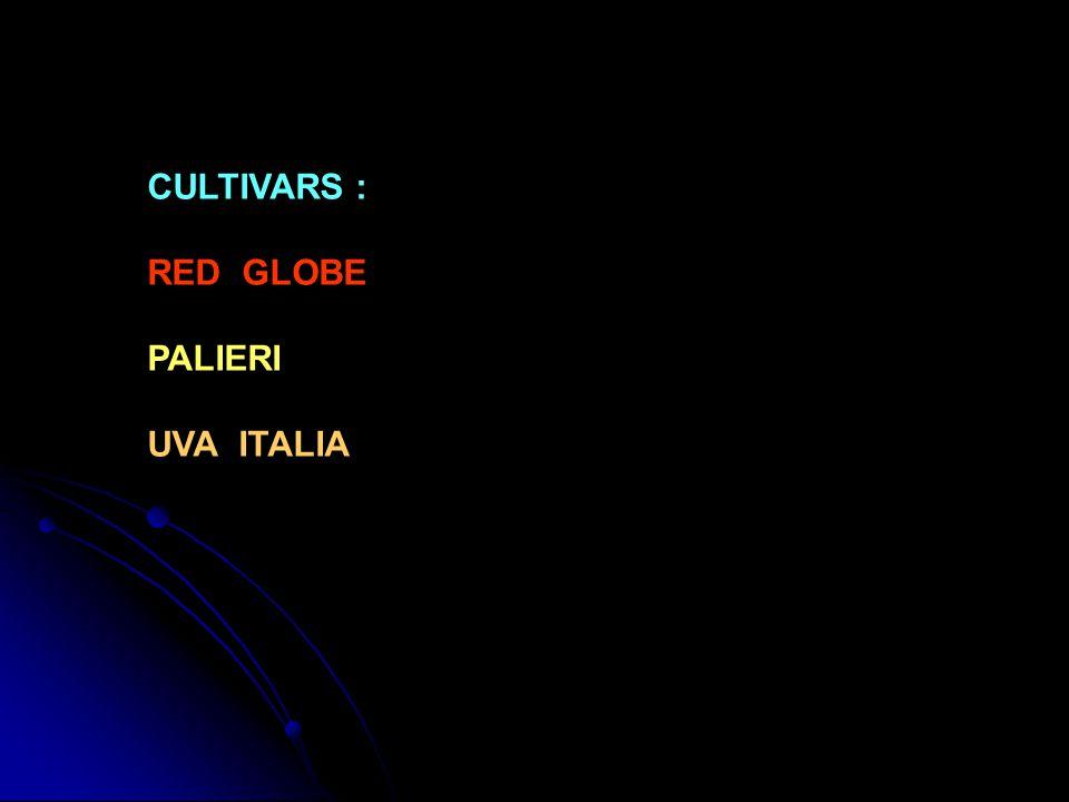 CULTIVARS : RED GLOBE PALIERI UVA ITALIA