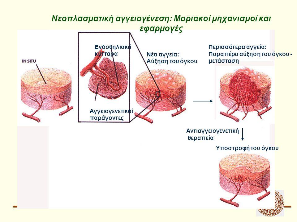 Νεοπλασματική αγγειογένεση: Μοριακοί μηχανισμοί και εφαρμογές Ενδοθηλιακά κύτταρα Αγγειογενετικοί παράγοντες Νέα αγγεία: Αύξηση του όγκου Περισσότερα αγγεία: Παραπέρα αύξηση του όγκου - μετάσταση Αντιαγγειογενετική θεραπεία Υποστροφή του όγκου