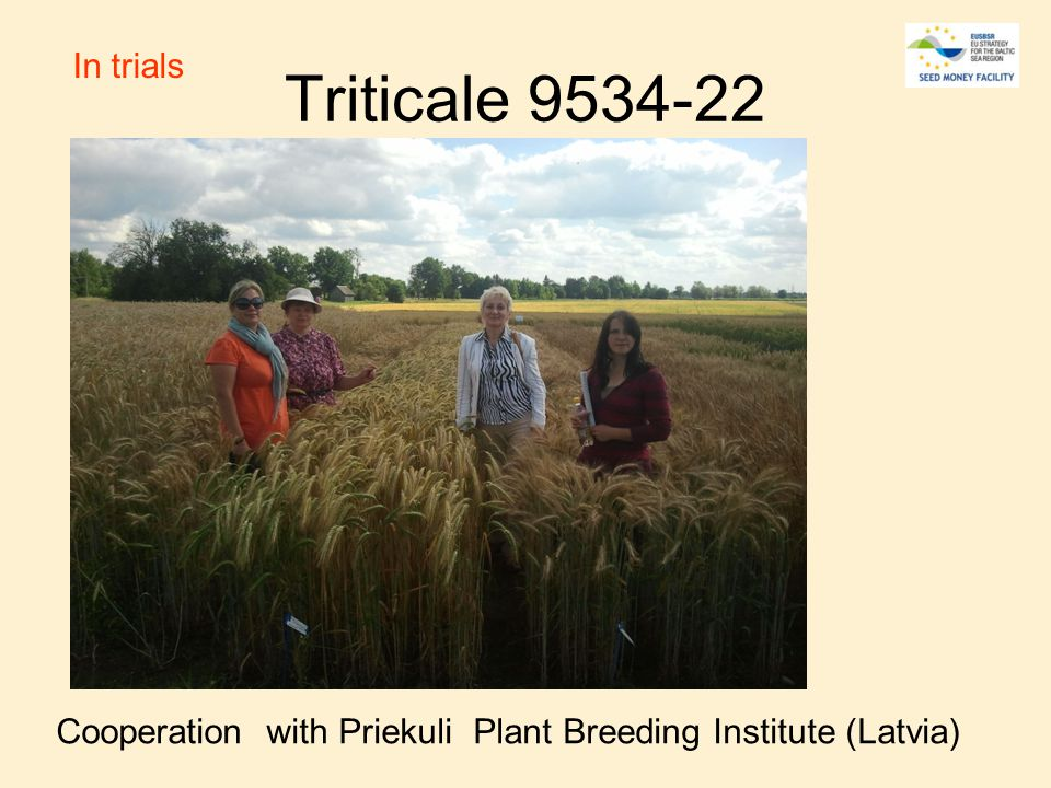 Triticale 9534-22 Cooperation with Priekuli Plant Breeding Institute (Latvia) In trials