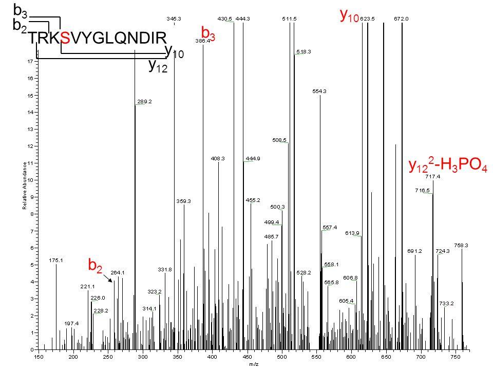 b 11 2 b 11 2 -H 3 PO 4 y2y2 GLQND-NH 3 b 6/ y 7 y5y5 a 6 -H 3 PO 4 TRKSVYGLQNDIR y5y5 y7y7 b 11 a 6,b 6 b 8 -H 3 PO 4 y2y2 b8b8