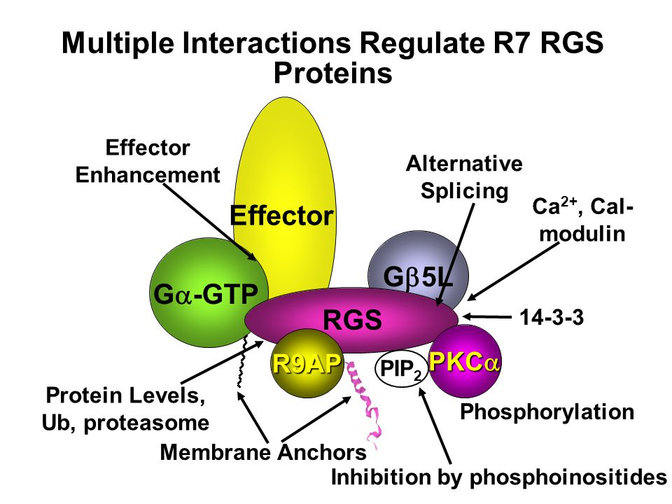 GAP activity of RGS9 is stimulated by PI, but inhibited by PIP, PIP 2 and PIP 3 0.03 0.01 0.02 0.03 0.04 RGS9 +PI +PI3P +PI4P +PI(4,5)P2 +PI(3,4,5)P3  K inact (s -1 ) The I (Intervening) domain of RGS9 is a novel phosphoinositide binding domain Muling Mao, Wed.