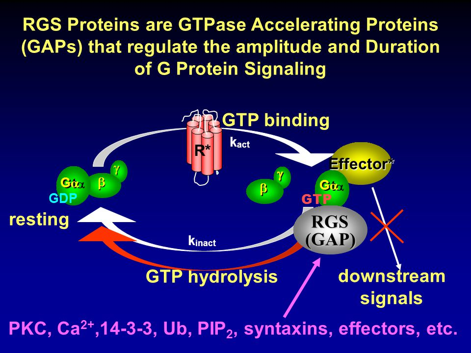 .05.1.15.3.5 1 2.2 k inact (s -1 ) Effect of GTPase Rate Constant on Effector Activity Time Course 01020304050 Time (s) 0 0.04 0.08 0.12 0.16 Relative Effector Activity R* inactivation rate constant set at: k R* = 0.5 s -1.05.1 2.15.5 G protein inactivation rate constant for G protein activation by R*, k act = 100 s -1