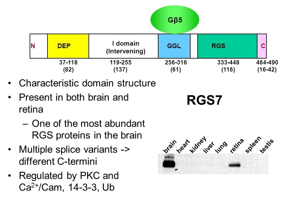 The RGS family Zheng B et al, Trends Biochem Sci 1999 100 aa R7 Family