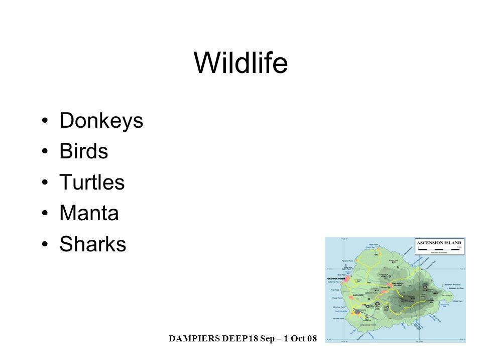 DAMPIERS DEEP 18 Sep – 1 Oct 08 Wildlife Donkeys Birds Turtles Manta Sharks
