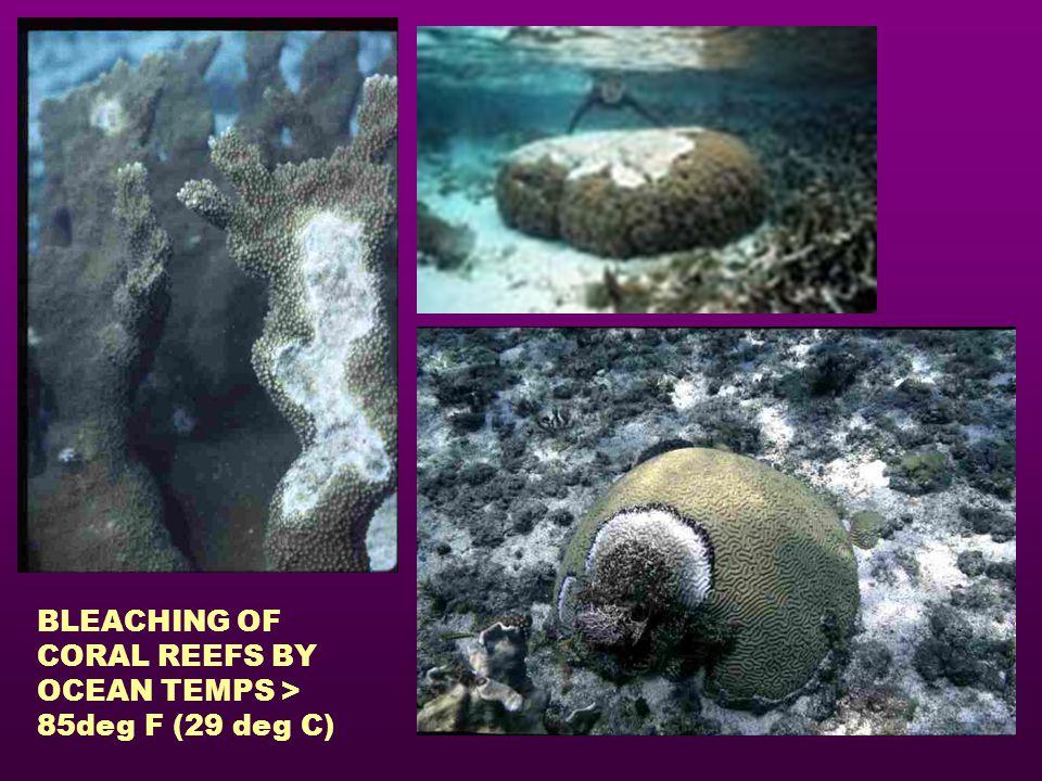 BLEACHING OF CORAL REEFS BY OCEAN TEMPS > 85deg F (29 deg C)