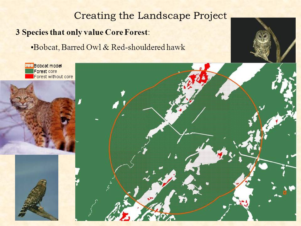 Creating the Landscape Project Bobcat, Barred Owl & Red-shouldered hawk 3 Species that only value Core Forest: