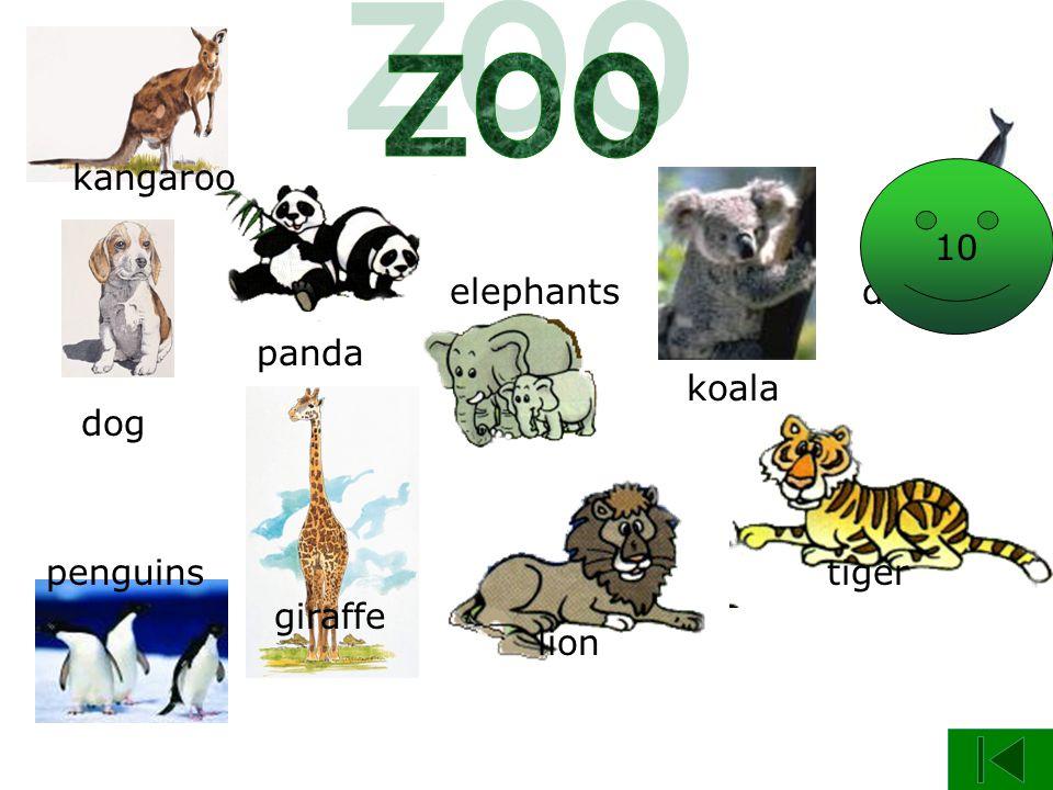 panda dog giraffe kangaroo penguins elephants koala lion tiger dolphin 9 10