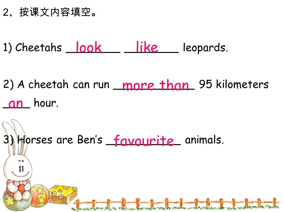 2 、按课文内容填空。 1) Cheetahs ________ ________ leopards. 2) A cheetah can run ____________ 95 kilometers ____ hour. 3) Horses are Ben's ___________ animals