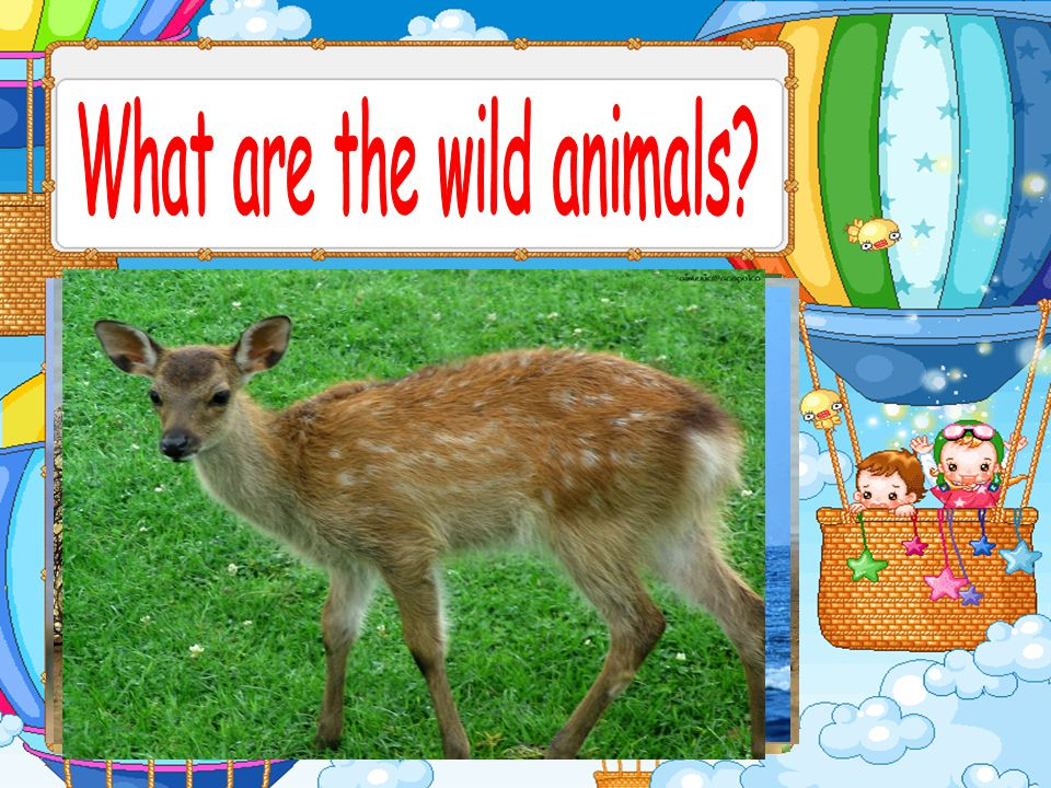 Which of these animals jumps highest.The kangaroo jumps highest.