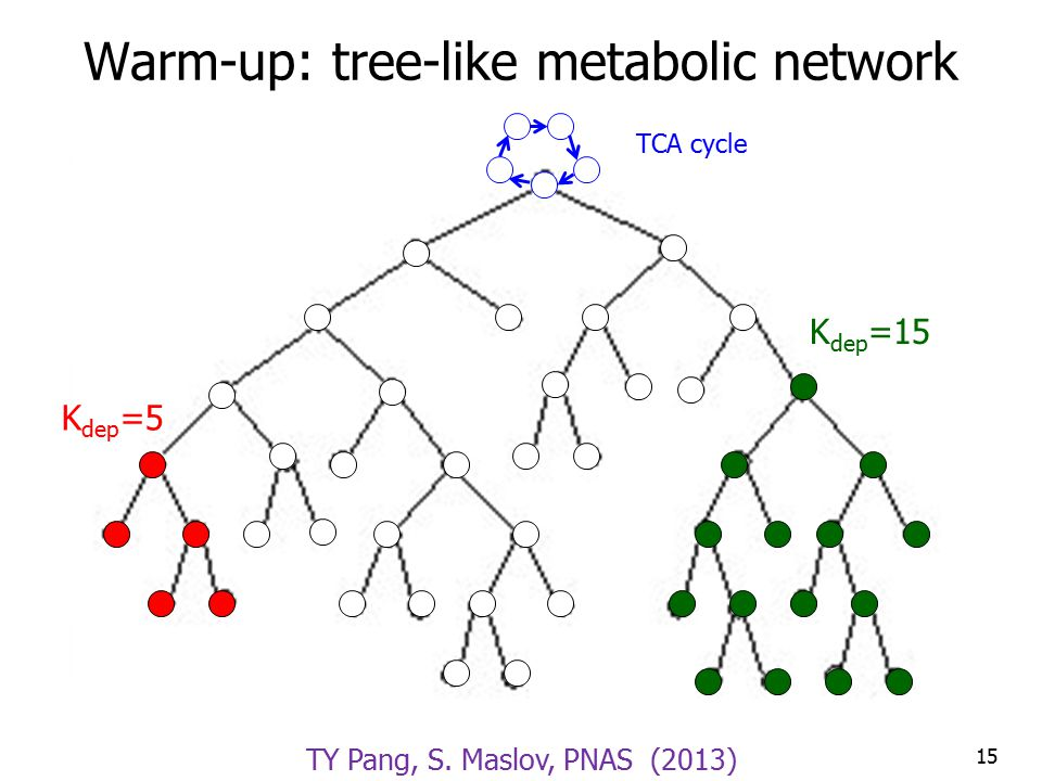 Warm-up: tree-like metabolic network 15 K dep =5 K dep =15 TCA cycle TY Pang, S.