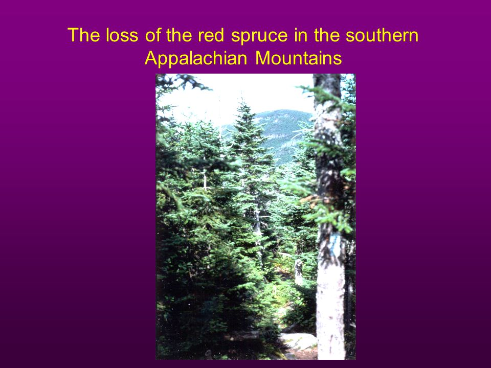 The loss of the red spruce in the southern Appalachian Mountains
