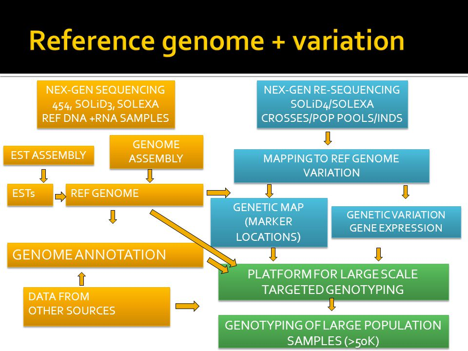 ESTs REF GENOME GENOME ANNOTATION DATA FROM OTHER SOURCES DATA FROM OTHER SOURCES NEX-GEN SEQUENCING 454, SOLiD3, SOLEXA REF DNA +RNA SAMPLES NEX-GEN SEQUENCING 454, SOLiD3, SOLEXA REF DNA +RNA SAMPLES GENOME ASSEMBLY NEX-GEN RE-SEQUENCING SOLiD4/SOLEXA CROSSES/POP POOLS/INDS NEX-GEN RE-SEQUENCING SOLiD4/SOLEXA CROSSES/POP POOLS/INDS MAPPING TO REF GENOME VARIATION MAPPING TO REF GENOME VARIATION GENETIC MAP (MARKER LOCATIONS ) GENETIC MAP (MARKER LOCATIONS ) GENETIC VARIATION GENE EXPRESSION GENETIC VARIATION GENE EXPRESSION PLATFORM FOR LARGE SCALE TARGETED GENOTYPING GENOTYPING OF LARGE POPULATION SAMPLES (>50K) EST ASSEMBLY