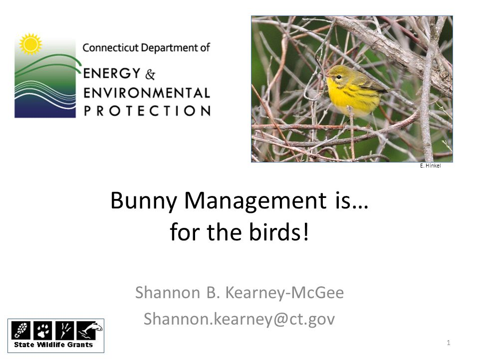 Bunny Management is… for the birds! Shannon B. Kearney-McGee Shannon.kearney@ct.gov E. Hinkel 1