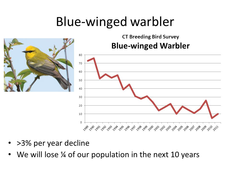 Blue-winged warbler >3% per year decline We will lose ¼ of our population in the next 10 years