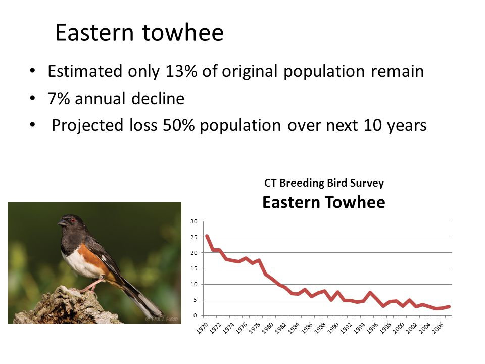Eastern towhee Estimated only 13% of original population remain 7% annual decline Projected loss 50% population over next 10 years