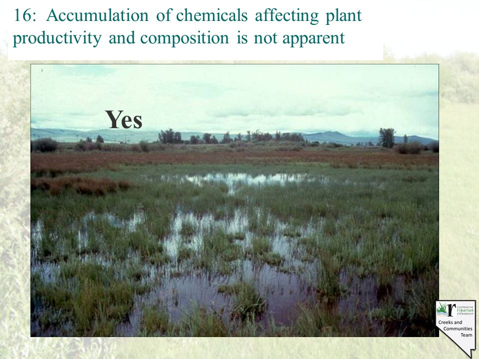 16: Accumulation of chemicals affecting plant productivity and composition is not apparent No