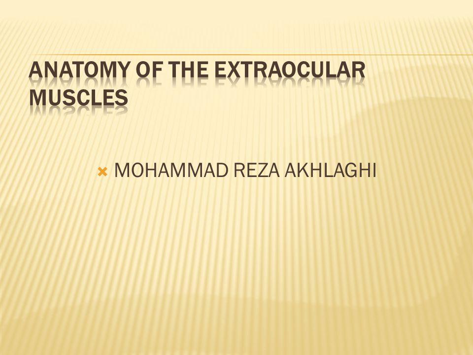  MOHAMMAD REZA AKHLAGHI