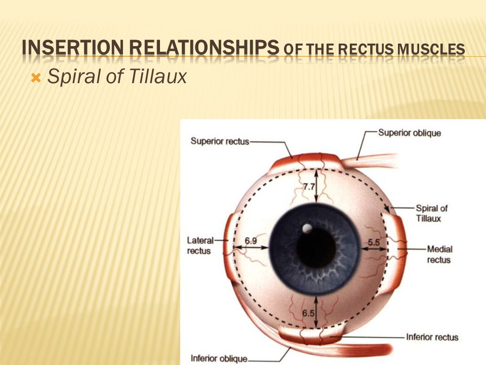  Spiral of Tillaux
