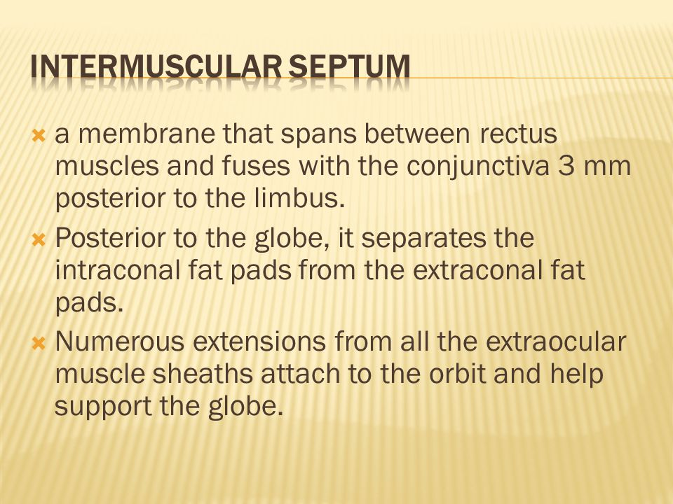  a membrane that spans between rectus muscles and fuses with the conjunctiva 3 mm posterior to the limbus.