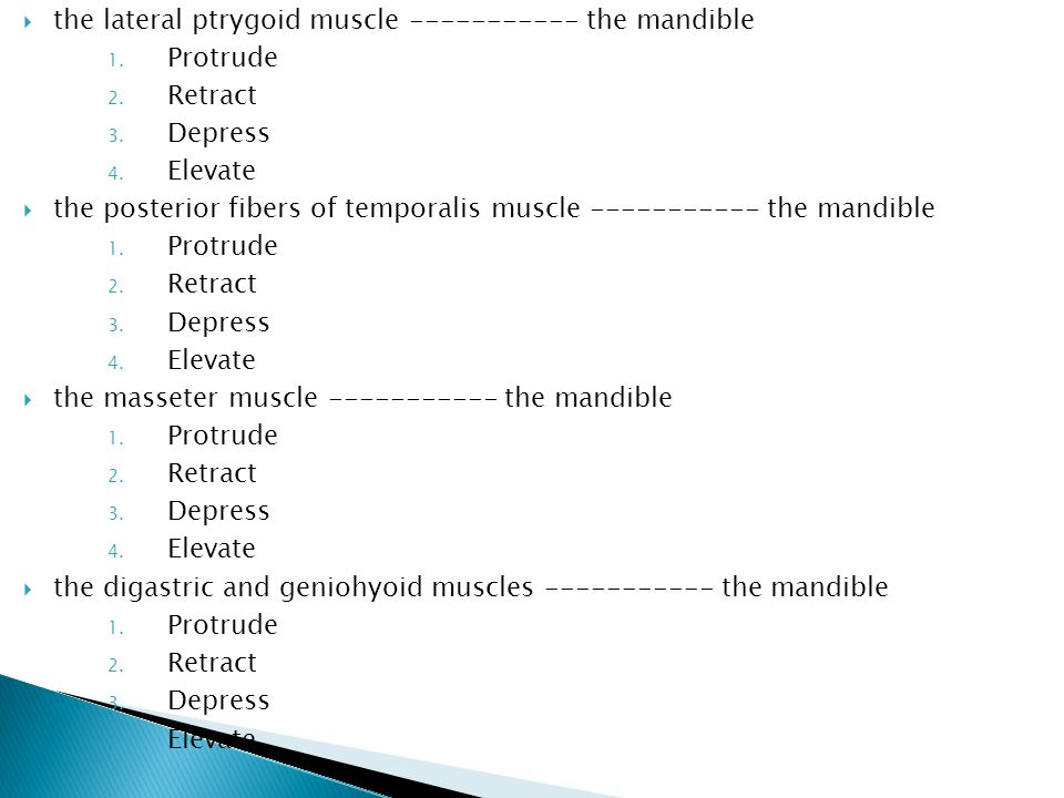  the lateral ptrygoid muscle ----------- the mandible 1.